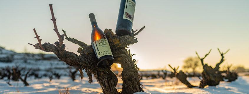 vinos vitulia en la nieve